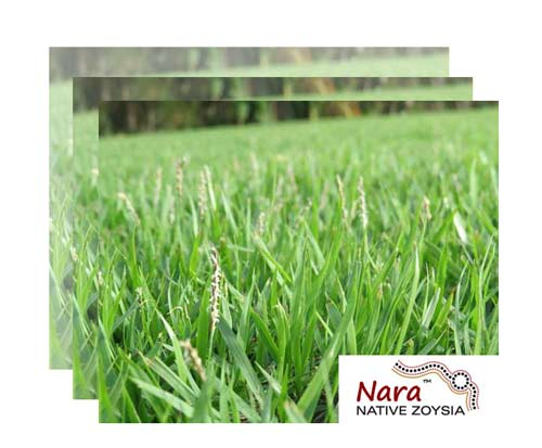 native turf byron bay